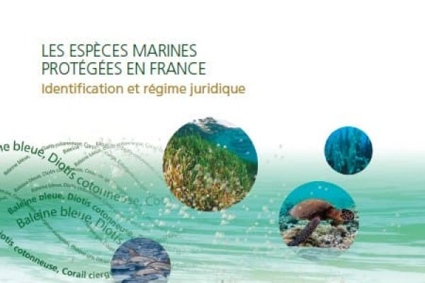 Especes marines protégées en France