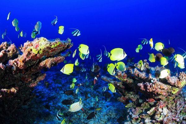oceans-recif-coralliens-pixabay